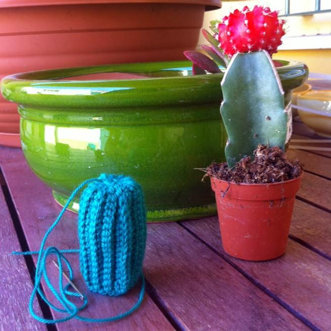cactus 016
