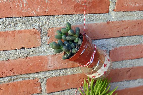 Cactus colgantes 10