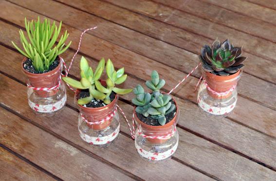 Cactus colgantes 17