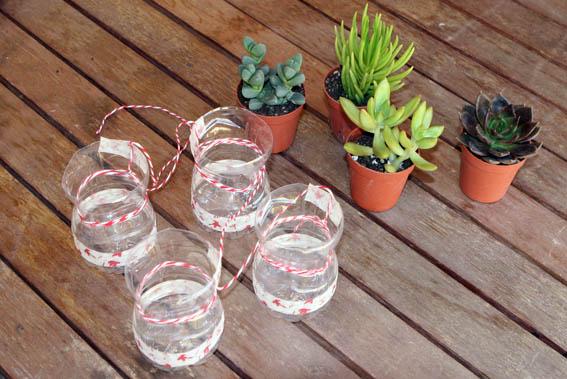 Cactus colgantes 18