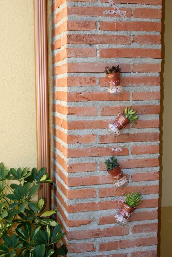 Cactus colgantes 2