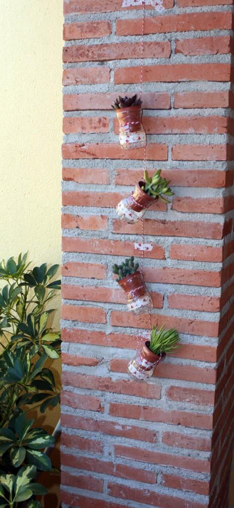 Cactus colgantes 6