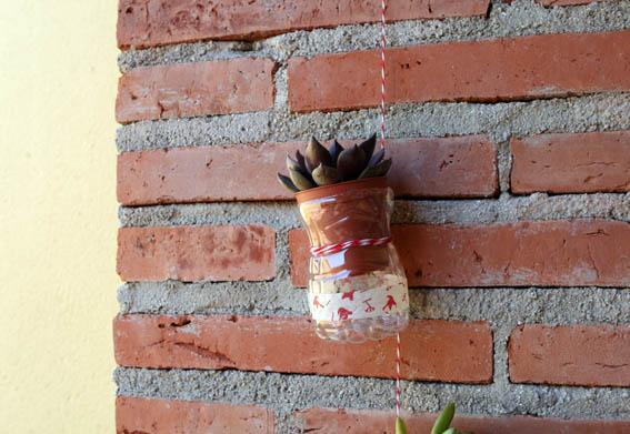 Cactus colgantes 8