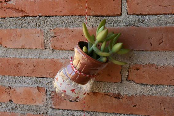 Cactus colgantes 9