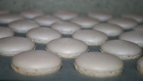 macarons 41